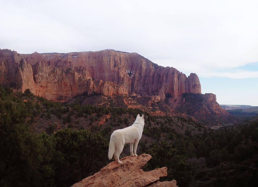 dog-adventures-john-stortz-16