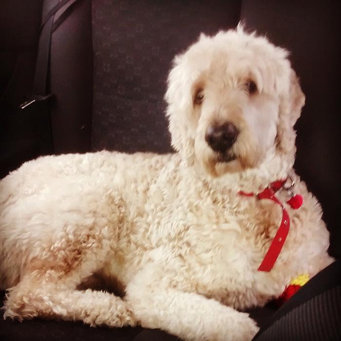 go-pro-dog-sad-owner-leaves-5