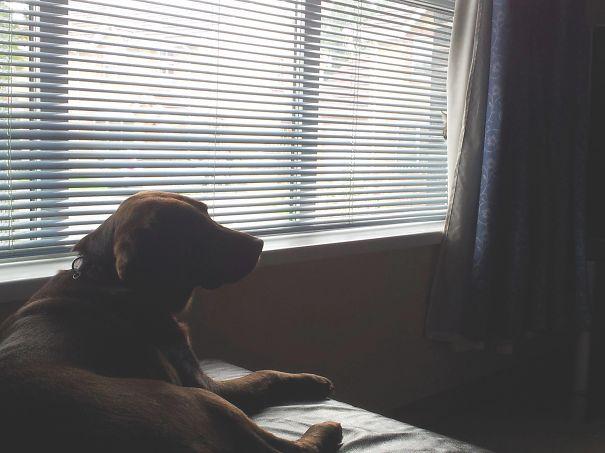 este cão não tem noção nenhuma do que o espera