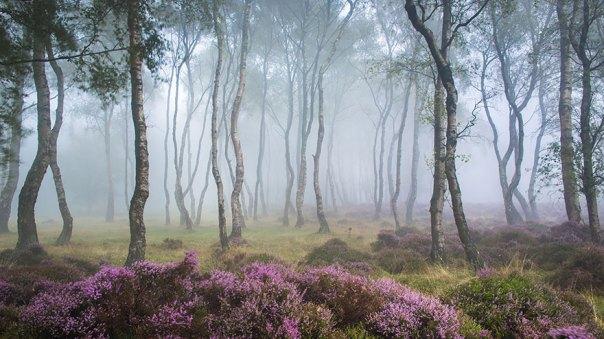 Stanton Moor, Peak District, Reino Unido