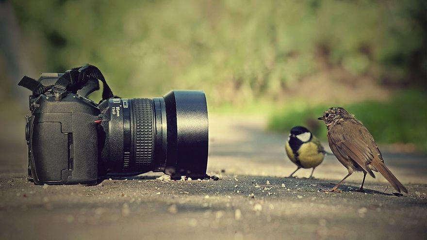 Posing Birds