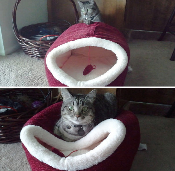 Purrfect examples of cat logic