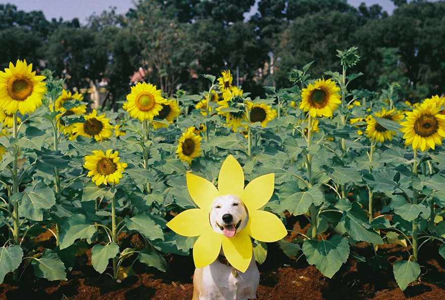 happy-dog-photography-gluta-thailand-14