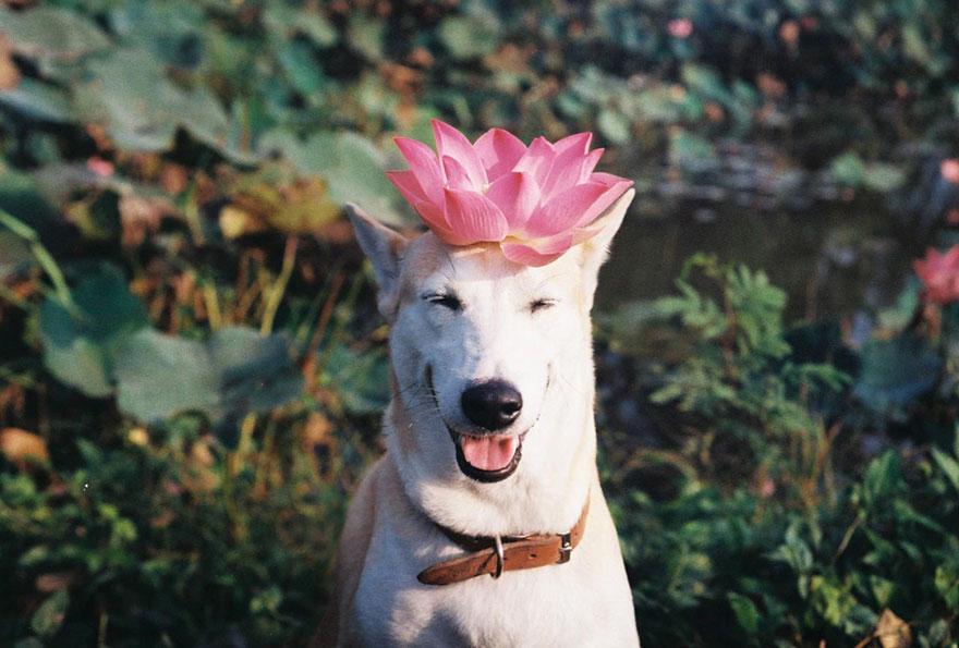 happy-dog-photography-gluta-thailand-15