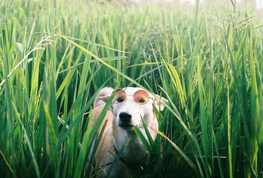 happy-dog-photography-gluta-thailand-19