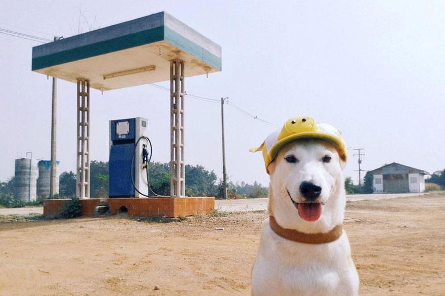 happy-dog-photography-gluta-thailand-21