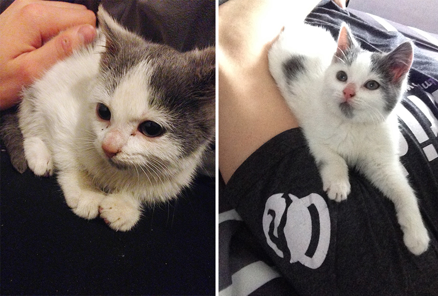 mascotas-adoptadas-antes-despues (3)