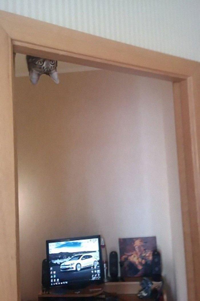 ninja cat hiding funny 104  605 - 20+ Ninja Cats That Have Mastered The Ancient Art Of Ninjutsu