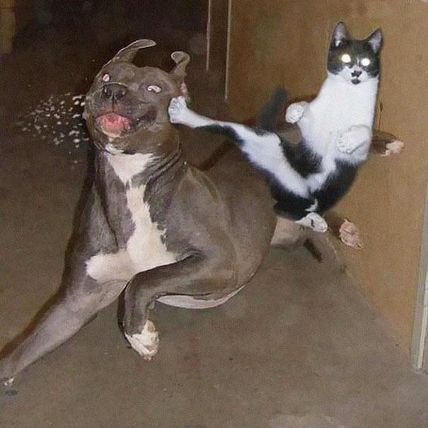 Gato Ninja