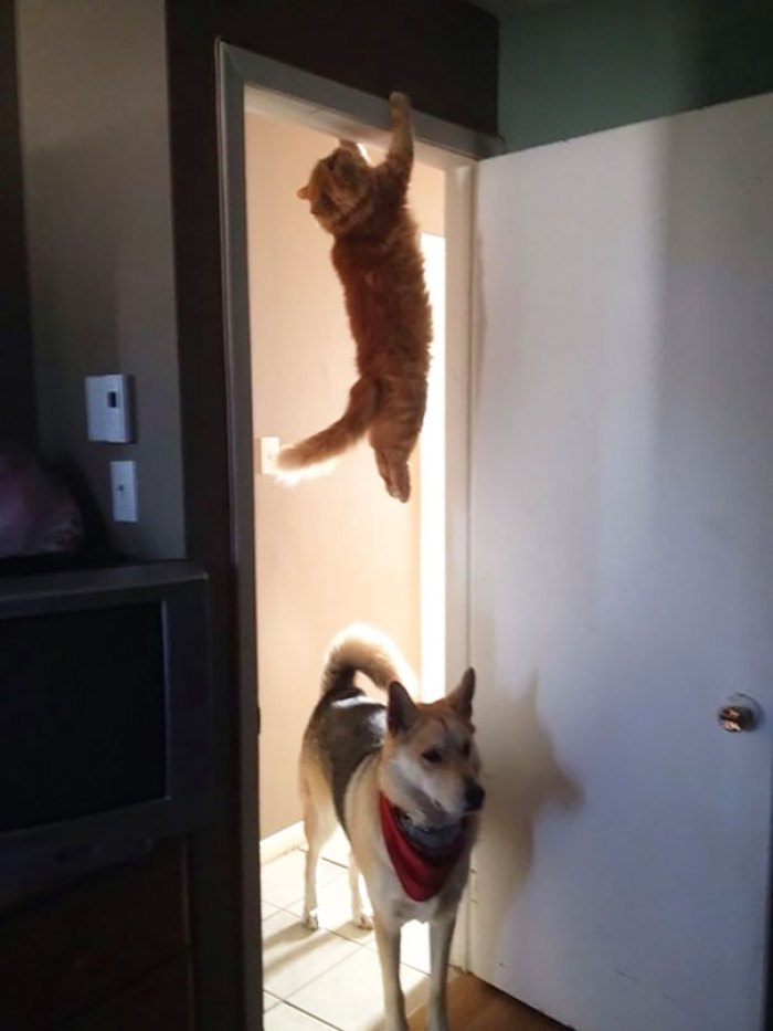 ninja cat hiding funny 107  605 - 20+ Ninja Cats That Have Mastered The Ancient Art Of Ninjutsu