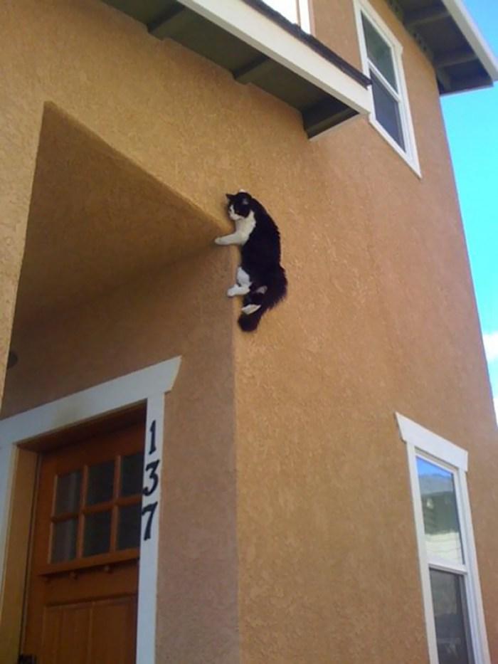 ninja cat hiding funny 44  605 - 20+ Ninja Cats That Have Mastered The Ancient Art Of Ninjutsu