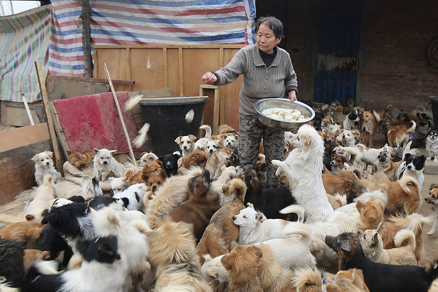 china-1300-stray-dog-shelter-wang-yanfang-4