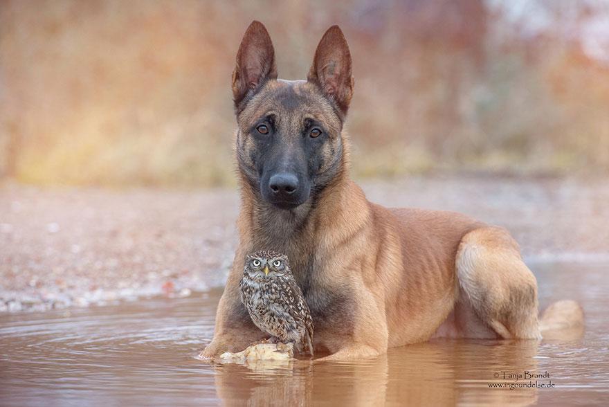 ingo-else-dog-owl-friendship-tanja-brandt-11
