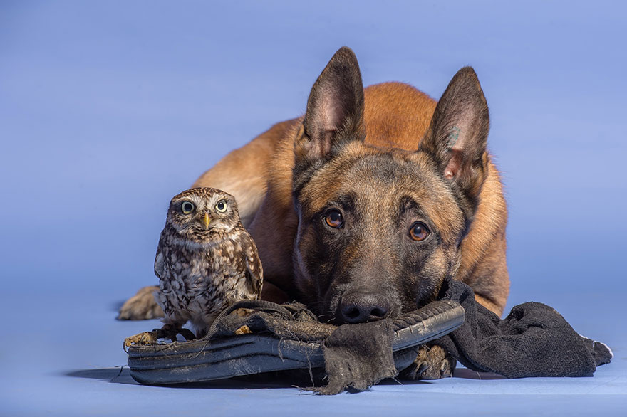 ingo-else-dog-owl-friendship-tanja-brandt-7