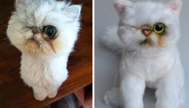 pet-copy-custom-plush-toys-cuddle-clones-24