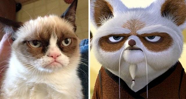 Grumpy Cat Looks Like Master Shifu From Kung Fu Panda