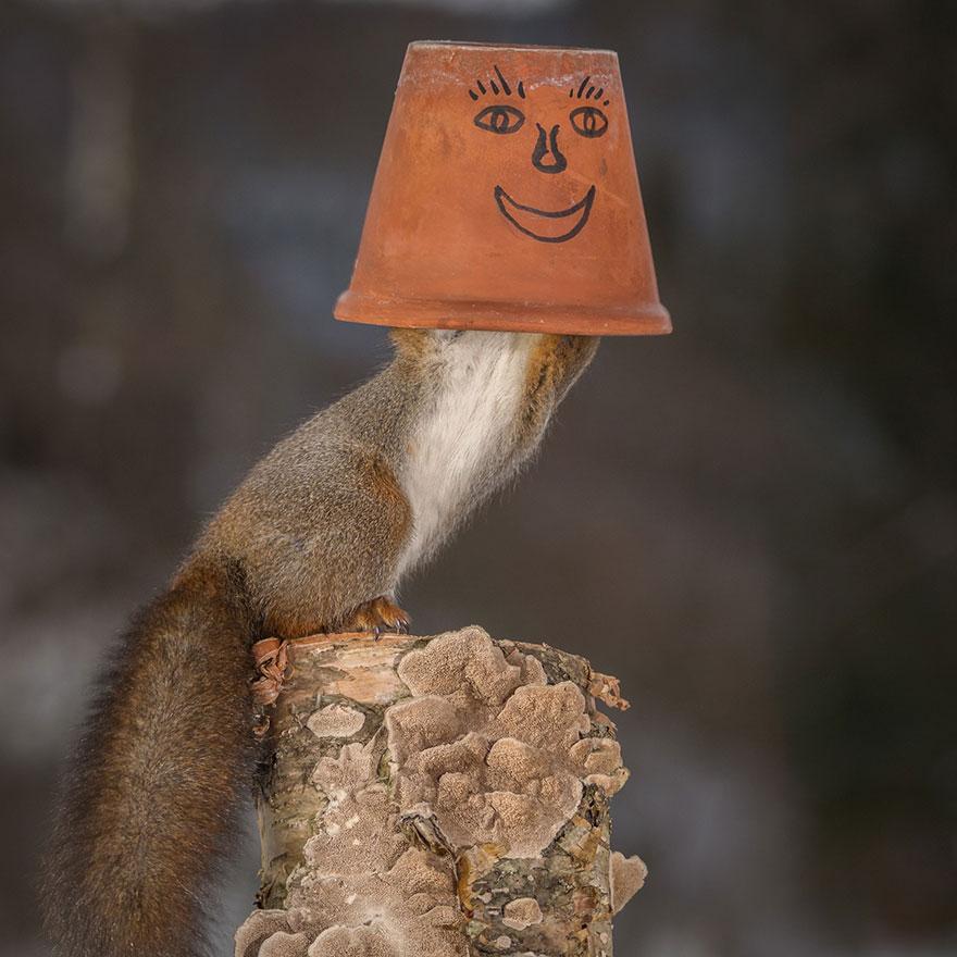 cute-squirrel-photography-geert-weggen-6