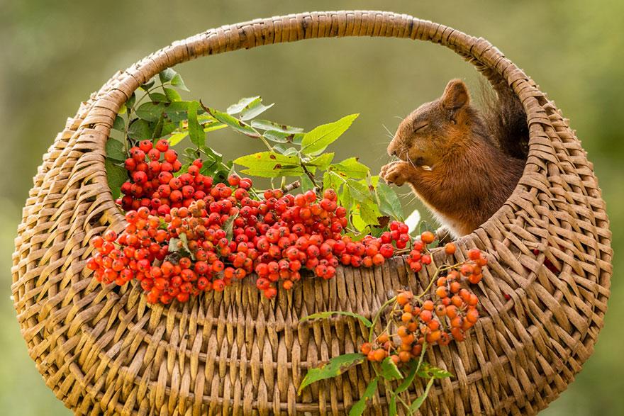 cute-squirrel-photography-geert-weggen-7