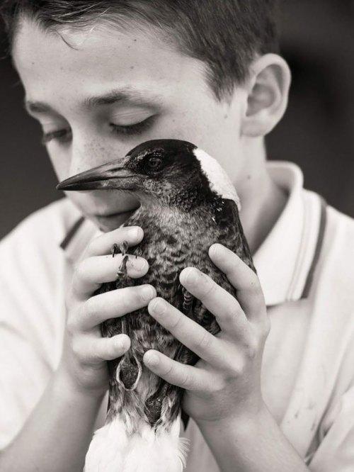 penguin-magpie-rescue-friendship-bloom-family-australia-1