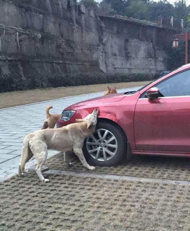 venganza-perro-callejero (2)
