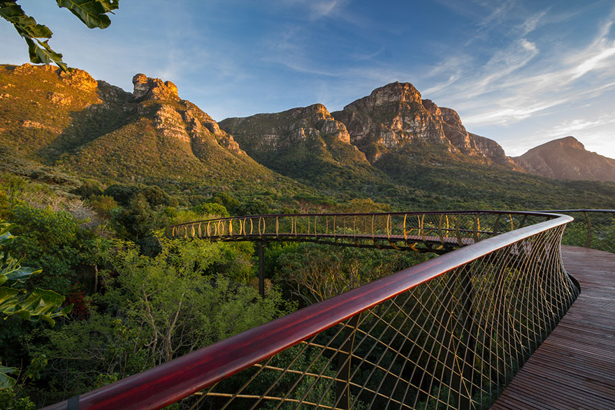 tree-canopy-walkway-path-kirstenbosch-national-botanical-garden-11