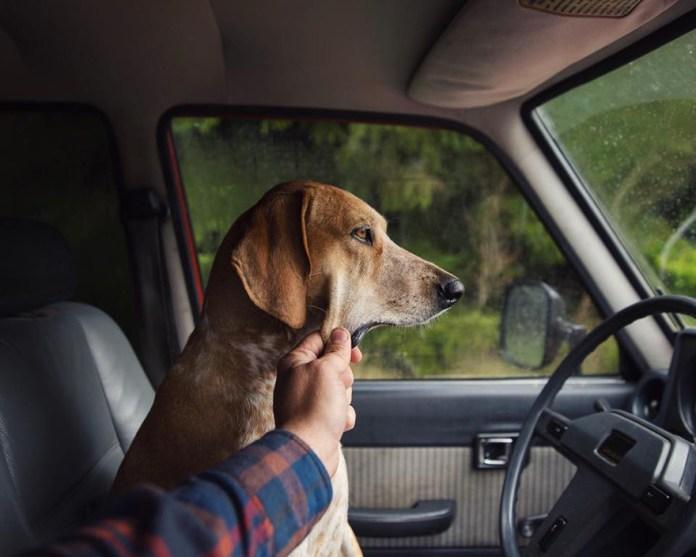 dog-traveling-car-motorcycle-maddie-on-road-4