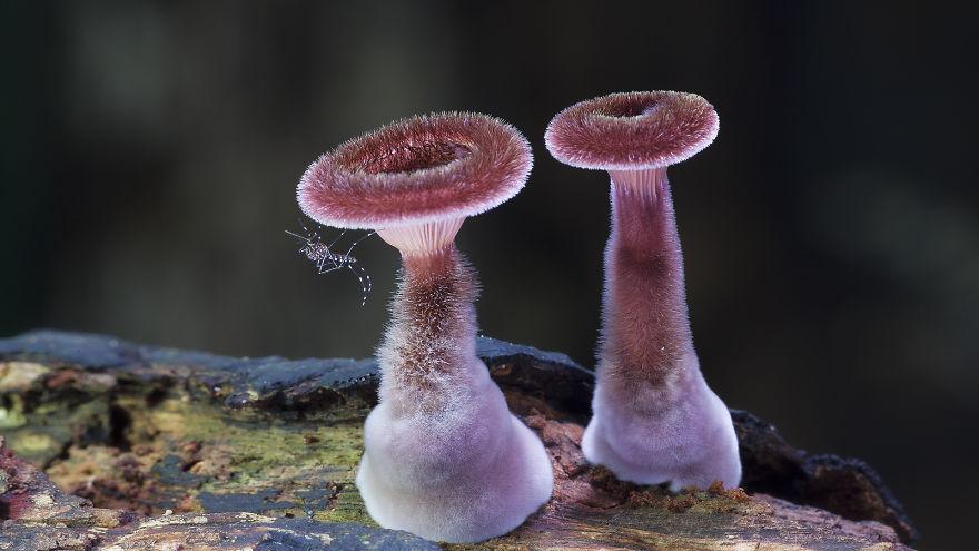 mushroom-photography-steve-axford-5