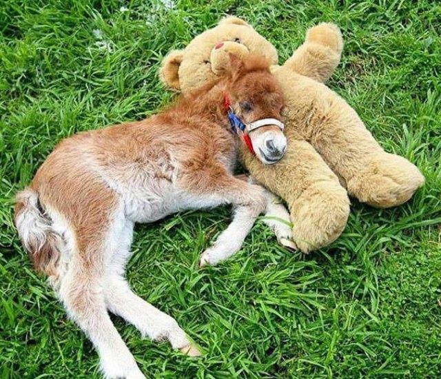 Little Horse With Teddy Bear