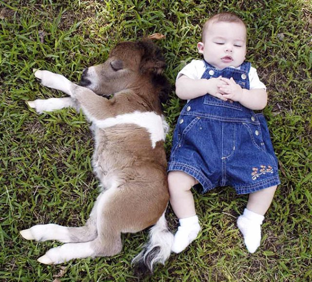 Mini Horse With A Baby