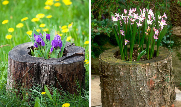 Tree Stump Garden