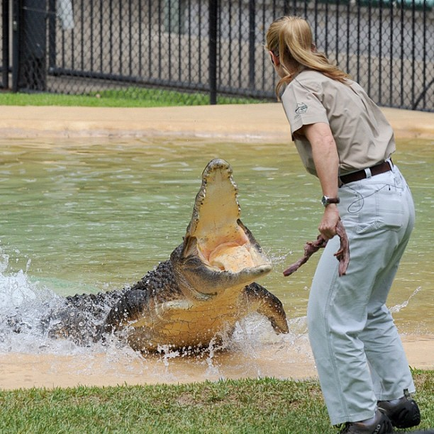 16-year-old-bindi-irwin-crocodile-hunter-fathers-legacy-australia-zoo-42