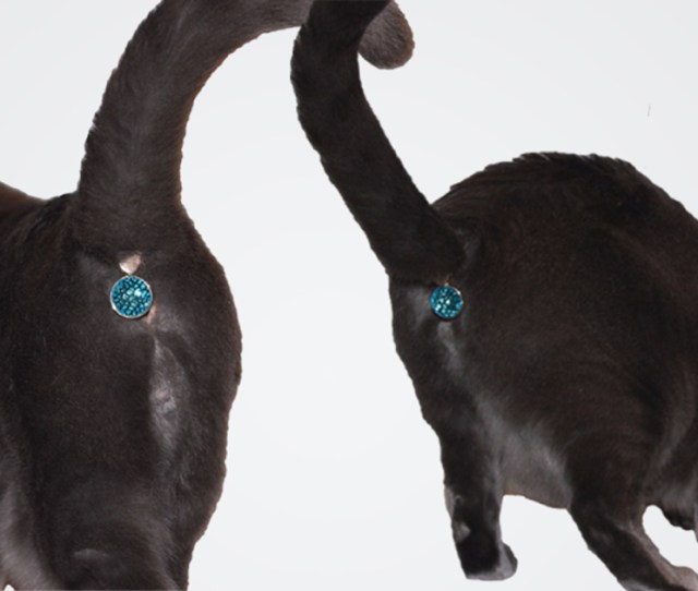 This Ass Cessory Turns Your Cats Butt Into A Glittering Jewel Bored Panda
