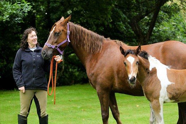 da-vinci-horse-pattern-north-yorkshire-3