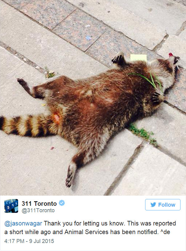 dead-raccoon-memorial-shrine-mourning-deadraccoonto-toronto-19
