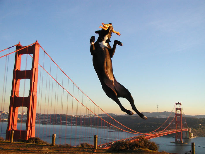 Giant Dog Terrorizing San Fransisco