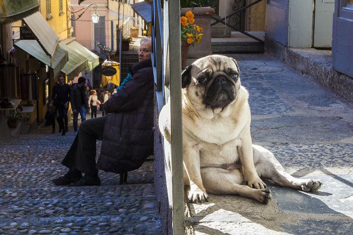 Gigantic Dog And Hobbit Lady