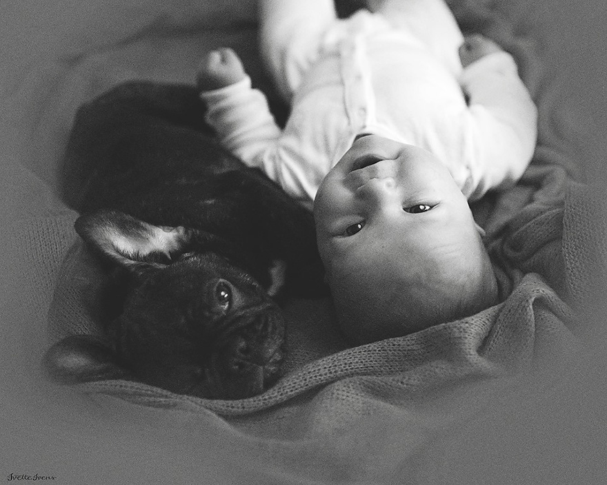 baby-dog-friendship-french-bulldog-ivette-ivens-6