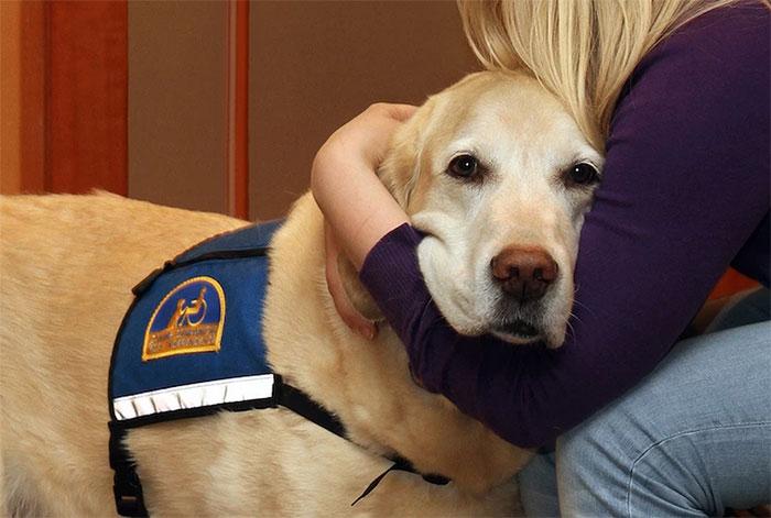 courthouse-dogs-calm-witness-victim-ellen-oneill-celeste-walsen-23