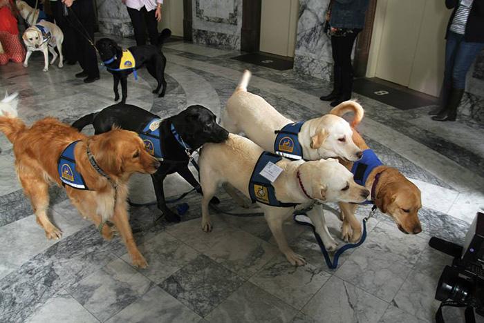 courthouse-dogs-calm-witness-victim-ellen-oneill-celeste-walsen-30