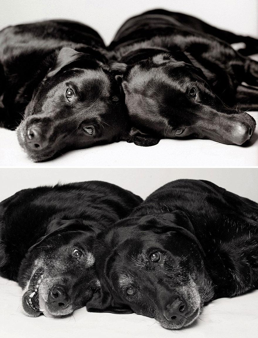 young-dog-old-years-book-amanda-jones-12