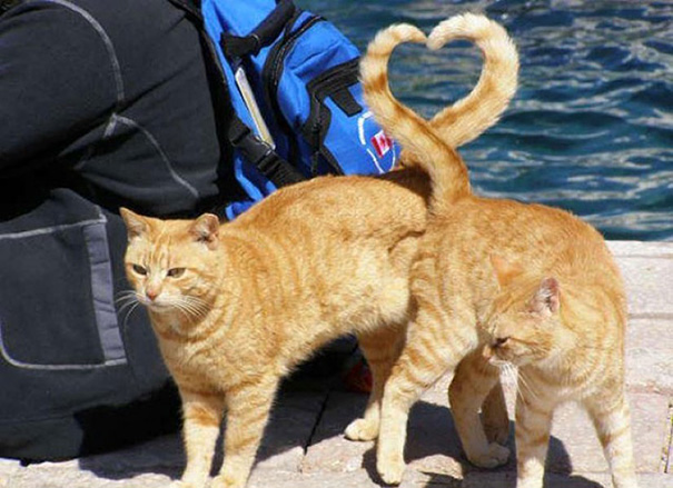 Perfectly Timed Cats