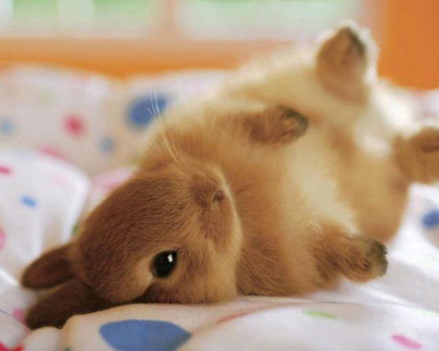Fluffy Little Bunny