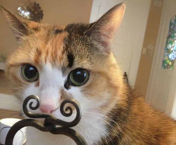 Cat Mustache