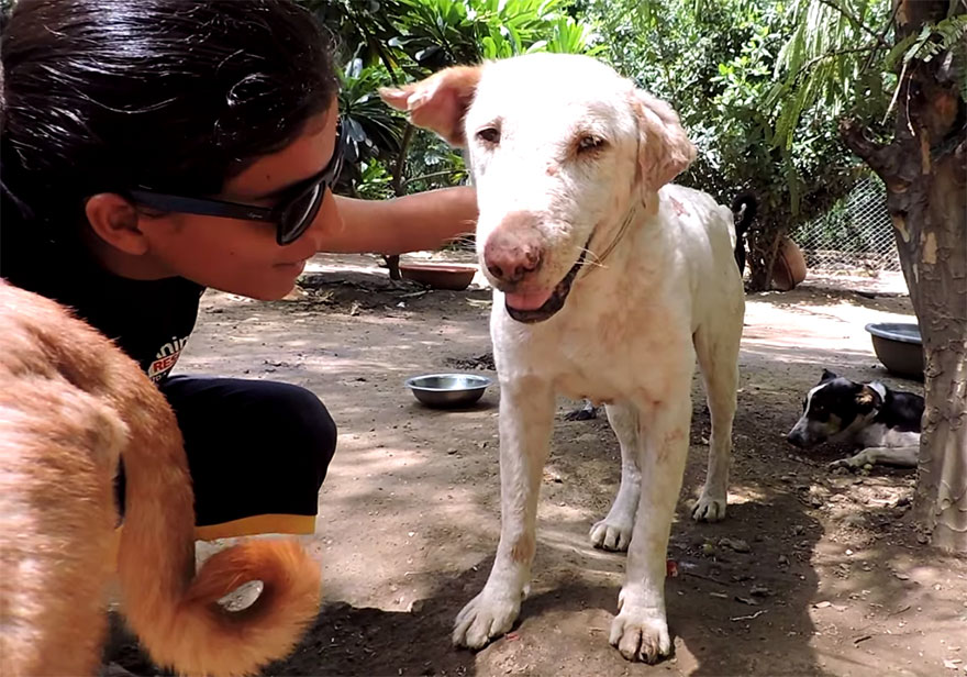mange-sick-dog-rescue-animal-aid-unlimited-2