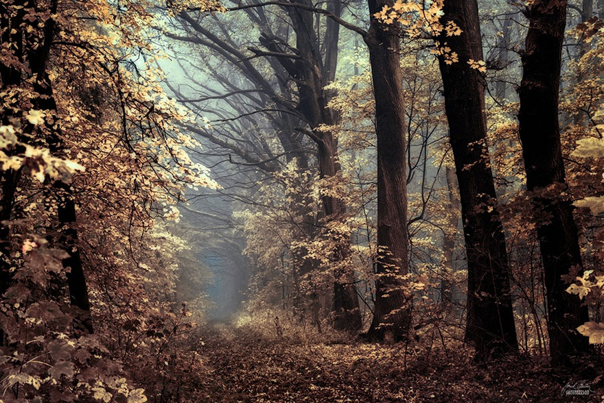 autumn-forests-photography-janek-sedlar