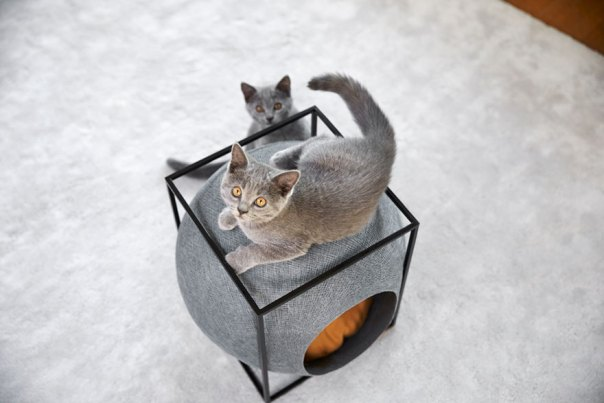 cat-cocoon-meyou-sanchez- gadenne-15