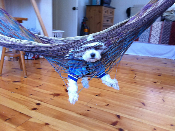 Maxie Relaxing In A Hammock