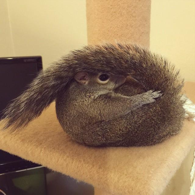 photogenic-rescue-squirrel-jill-20