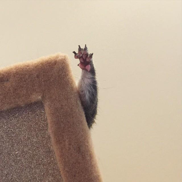photogenic-rescue-squirrel-jill-35