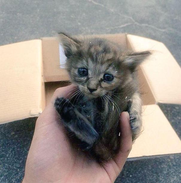 rescue-gattino-Komari-Ferret-fratelli-51